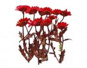 Flor seca prensada mini chrysanthemum with stem rojo 1929