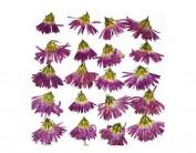 Set de 10 flores secas peacock morado 1923
